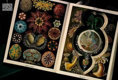 """""""The Treasure's Book"""": Ernst Haekel Prints and Jewelry by Michael Baumgarten for Vogue Gioello"""
