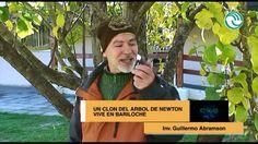 EXISTE UN CLON DEL MANZANO DE NEWTON EN LA ARGENTINA - A1Magazine.com.ar