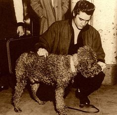 Poodle and Elvis