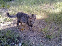 Simon - my wild cat