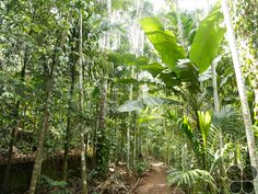 Pascoal Farms  http://www.hikeezee.com/explore/destinations/pascoal-farms-3625    #ecotourism #goa #spicegarden