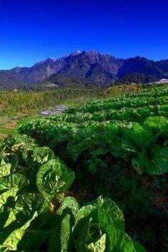Mount Kinabalu view from cabbage garden, Kundasang, Borneo, Sabah, Malaysia.