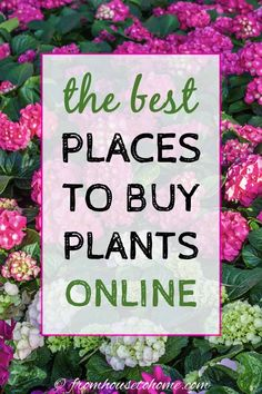 The Best Places To Buy Perennials, Trees and Shrubs Online - Gardening @ From House To Home Sun Plants, Shade Plants, Cool Plants, Garden Plants, House Plants, Fruit Garden, Delphinium Flowers, Flowers Perennials, Trees And Shrubs