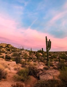 Arizona Travel Destinations Backpack Backpacking Vacation Wanderlust Off the Beaten Path Budget Desert Aesthetic, Nature Aesthetic, Photo Wall Collage, Picture Wall, Landscape Photography, Nature Photography, Photography Tips, Cowboy Photography, Cactus Photography