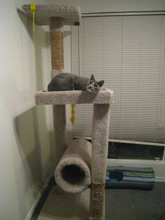 How to Build a Cat Climber. Is your cat bored and climbing and scratching your furniture? This is a great play place for your cat and it is relatively cheap to build yourself. A climber would be a much better choice and you can make it. Diy Projects To Build, Diy Craft Projects, Craft Ideas, Crazy Cat Lady, Crazy Cats, Cat Climber, Cat Towers, Space Cat, Cat Crafts