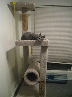 Gatos on pinterest - Trepadores para gatos ...