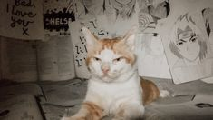Just For Fun, Photograph, Cats, Animals, Photography, Gatos, Animales, Animaux, Photographs