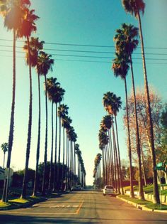 One of my 1st childhood memories of Cali. The sky high palm tree lined streets...