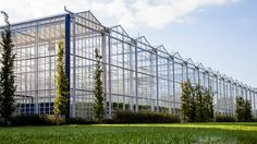 Greenhouses from Gakon Horticultural Projects by MKB Fotografie. Roof Joist, Roof Beam, Hydroponic Gardening, Hydroponics, Truss Structure, Greenhouse Cover, Drainage Channel, Steel Trusses
