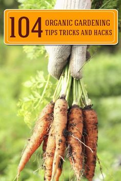 Great tips and tricks for organic gardening.