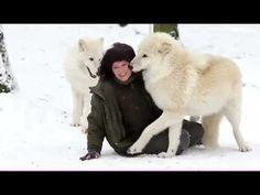 ▶ Белые волки... - YouTube