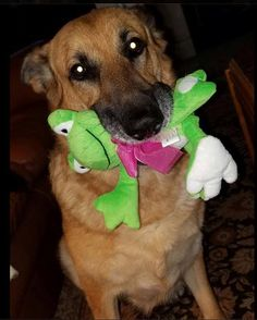 The cutest dog ever with a Frog Binkie from Design It Yourself Gift Baskets #dog