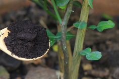 You might be amazed at the power of using coffee grounds throughout your entire landscape. They are great for flowers, vegetable plants and so much more! Coffee Grounds For Plants, Coffee Grounds As Fertilizer, Mint Plants, Jade Plants, Garden Compost, Garden Pests, Vegetable Garden, Building Raised Garden Beds, Planting Vegetables