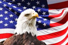 Eagle, America, Flag, Bird, Symbol - Free image - 219679