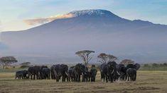 Mount Kilimanjaro View from Kenya Monte Kilimanjaro, Hotel Keys, Tanzania, Voyager Seul, Mount Kenya, Safari Holidays, Elephant Pictures, Kenya Travel, Africa Travel