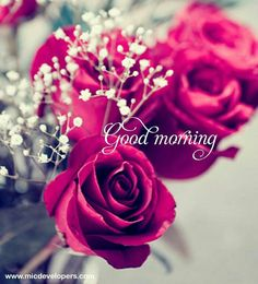 good morning images with love quotes Good Morning Happy Weekend, Good Morning Cards, Good Morning Messages, Good Morning Greetings, Good Morning Good Night, Good Morning Wishes, Good Morning Flowers Pictures, Morning Pictures, Mrng Wishes