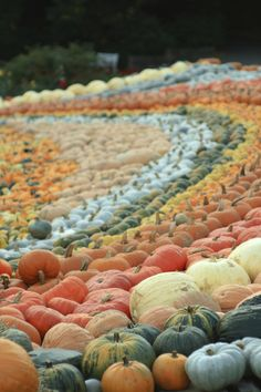 Ludwigsburg Pumpkin Festival, this Pumpkin Festival is heal every year around about now and consists of everything from Pumpkin sculpture to giant pumpkin boat races past the palace of Ludwigsburg!  Getting there by train: http://uk.voyages-sncf.com/en/destination/germany