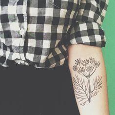 Botanical dill