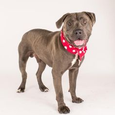 Gentle Alfie is available for adoption at our Mission campus!