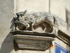 Un renard dans la ville.