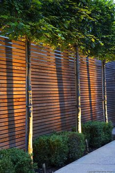 Large Wimbledon Garden | Up-lit pleached hornbeams underplanted with box in town garden | Charlotte Rowe Garden Design