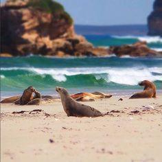 Authentic Kangaroo Island's photo.