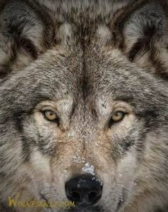 You can't escape your own reflection. But you can change what you see in the mirror, and how you see it. ~ Springwolf