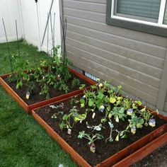 Vegetable garden ... 2 out of 4... Slowly but surely :)