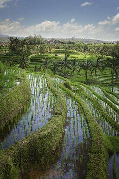✯ Rice Fields - Jatiluwih, Bali, Indonesia