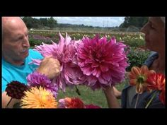 Dahlia Varieties by Swan Island Dahlias, learn about all the different styles of blooms that this plant has. {video} http://www.youtube.com/watch?v=11QUNMr-r0E&list=UUuvlYdtnc30gDVdlX3uAVpQ