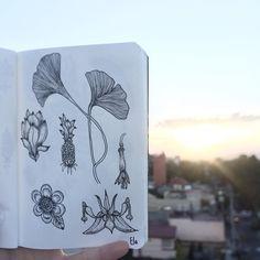 """Ela Andrade en Instagram: """"Piña  #illustration #illustrart #art #artsy #artist #arte #drawing #draw #monoart #blackandwhite #instablackandwhite #insta_bw #bnw…"""""""
