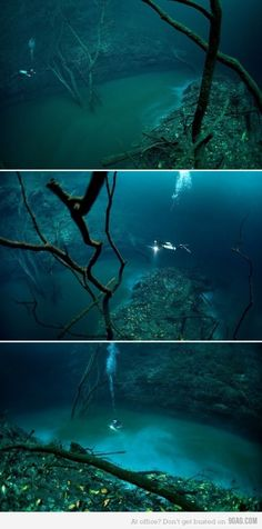"""Cenote Angelita - Yucatan Peninsula, Mexico (The """"underwater river"""" is actually a briny mix of salt water and hydrogen sulfide. It's much more dense than regular salt water, so it sinks to the bottom and forms a distinct separation that acts and flows like a river.)"""