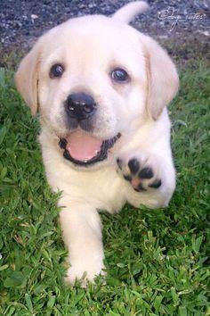 WeRateDogs™ (@dog_rates)   Twitter