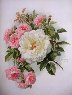 PRINT FREE SHIP Victorian Morning Roses Paul de Longpre White and Pink Cabbage…