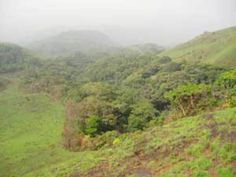 Gallery forest in Guinea, CC Wikimedia Commons