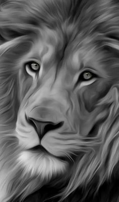 Katerchen İphone Wallpaper black and white lion Lion Wallpaper Iphone, Animal Wallpaper, Lion Images, Lion Pictures, Art Pictures, Big Cats Art, Cat Art, Beautiful Cats, Animals Beautiful