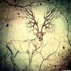 tree antlers - Google Search