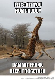 go home frank you're drunk! :))
