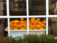 Rubber Ducks in a Tub     Stock imprintable rubber ducks for your business or organization