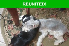 Great news! Happy to report that Scrappy has been reunited and is now home safe and sound! :)