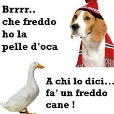 Immagini divertenti che freddo che fa Funny Images, Funny Pictures, Italian Memes, Savage Quotes, Minions Quotes, Funny Pins, Funny Comics, Funny Animals, Funny Jokes