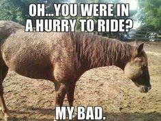 #horses #funny
