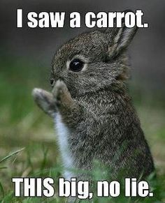 little bunny fufu...
