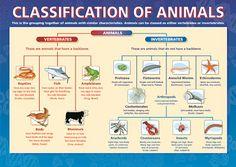 Weeks 5 & 6. Animal Kingdom: Vertebrates & Invertebrates