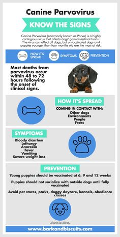 Puppy Guide - Surviving The First 24 Hours Parvo can be deadly in dogs, most commonly puppies. Know the signs.Parvo can be deadly in dogs, most commonly puppies. Know the signs.