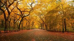 Autumn in the Park - http://www.fullhdwpp.com/nature/landscapes/autumn-in-the-park/