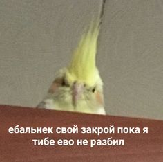 У Г А Р ❤️ Memes Funny Faces, Stupid Memes, Funny Relatable Memes, Cat Memes, Dankest Memes, Jokes, Hello Memes, Russian Memes, Cute Love Memes