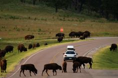 From the Pacific Coast Highway to Route 66, Travel Channel highlights 10 of the most popular road trip routes across the U.S.