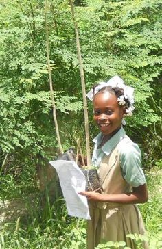 Students learn about the nutritional Moringa tree at school and plant their own trees at home. Thanks to James Kishlar and the ARN organization through Signa Haiti for providing the trees.