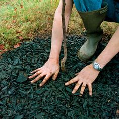 Garden mulch benefits plants by reducing moisture loss through evaporation, insulating soil from winter cold and summer heat, minimizing erosion and compaction, and suppressing weeds.